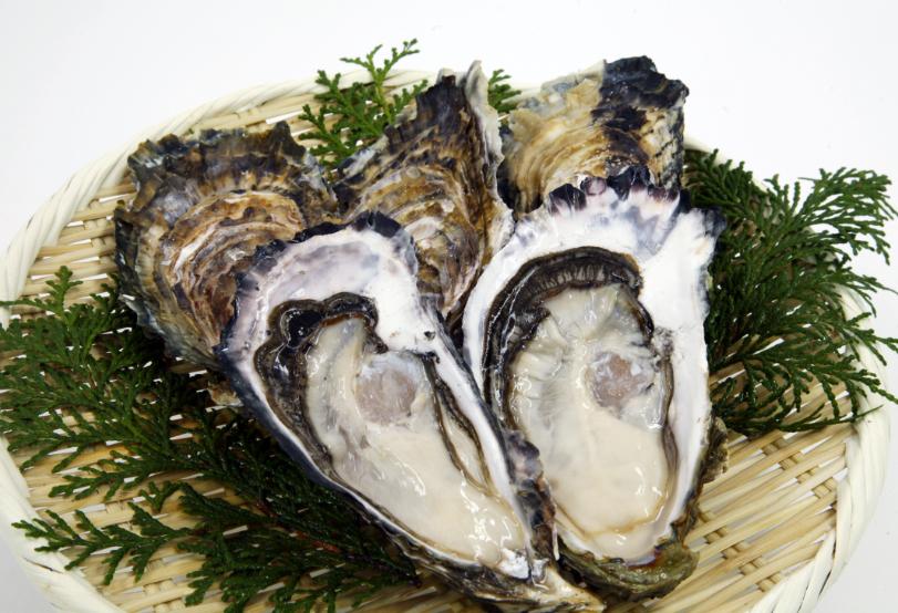 Watari Oysters
