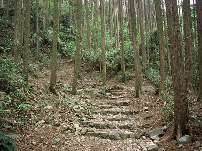 Edo Route