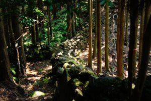 熊野古道 大吹峠(大泊町側登り口)