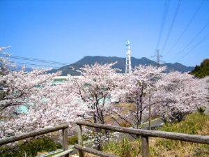玄工山(桜公園)