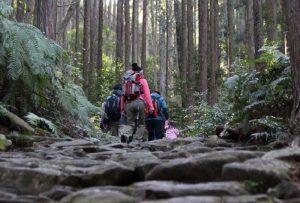 熊野古道 馬越峠(紀北町側登り口)