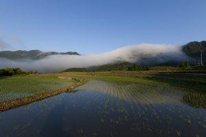 風伝の朝霧