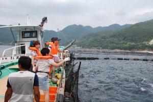 まぐろ養殖餌やり体験とたこかご漁